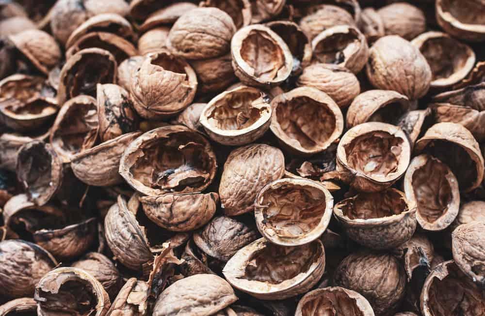 cracked nut shells